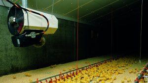 Ferma drobiu wyposażona w nowoczesną nagrzewnicę agro Winterwarm ECO charakteryzują się niskim zużyciem energii.