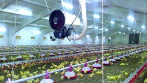Ferma drobiu wyposażona w nagrzewnice gazowe DXA/DXB marki Winterwarm.